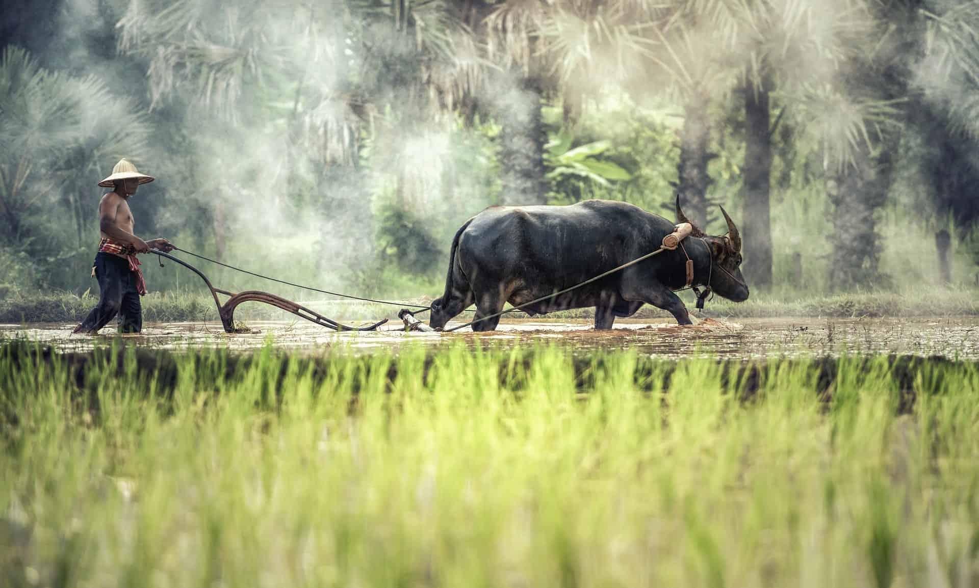 Aisa plantage landscape